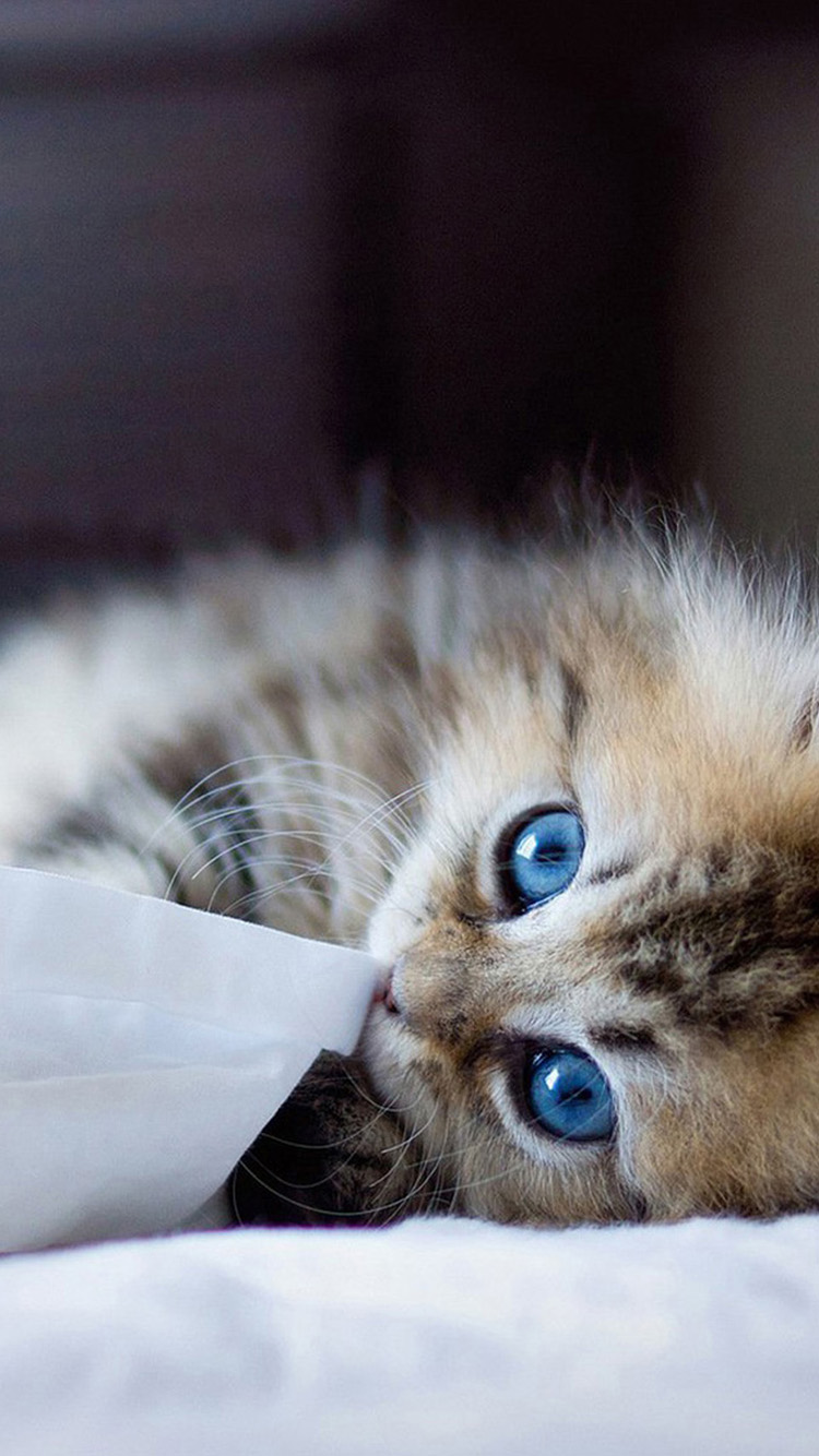 49+ Cute Kitten iPhone Wallpaper on WallpaperSafari