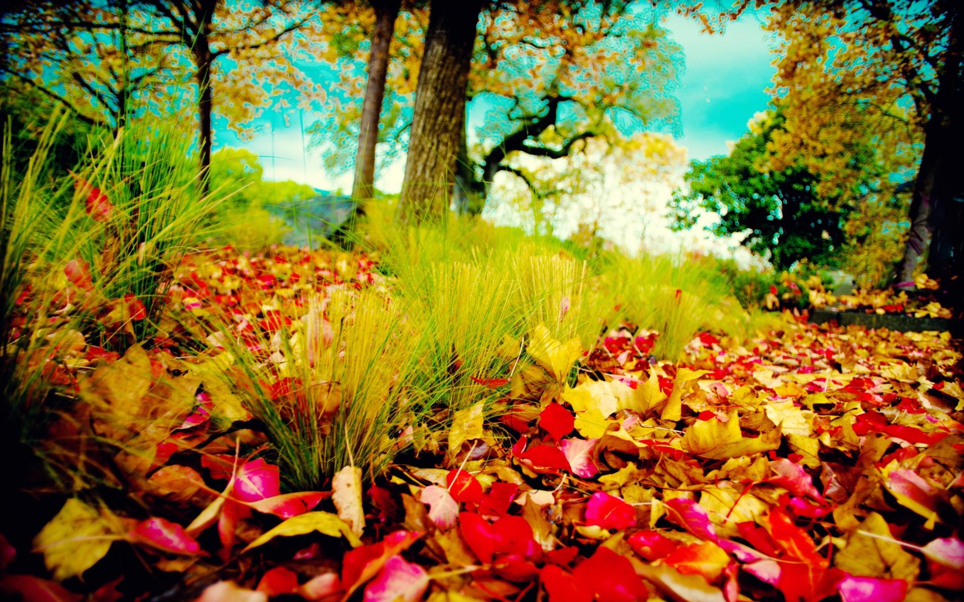 fall colors desktop wallpaper - www.wallpapers-in-hd.com