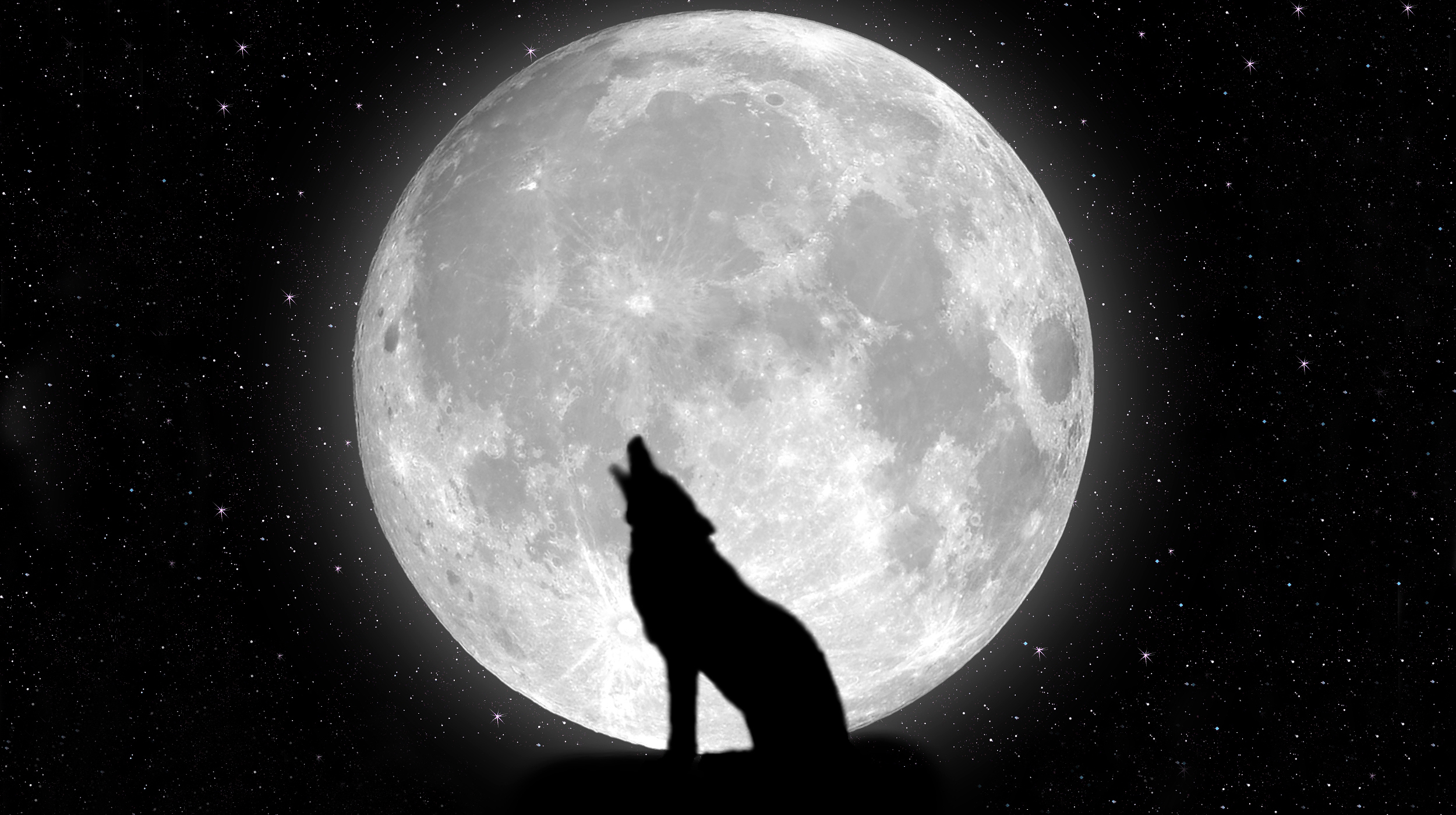 Hd wallpaper wolf - Wallpaper Black Wolf Backgrounds Hd Wallpaper Background Desktop