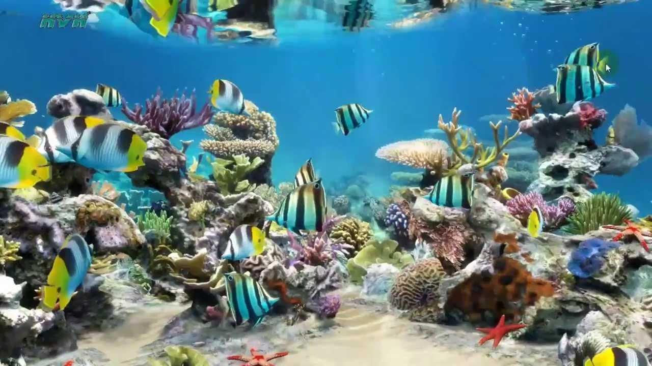 Aquarium live wallpaper for desktop wallpapersafari - Live wallpaper for pc ...