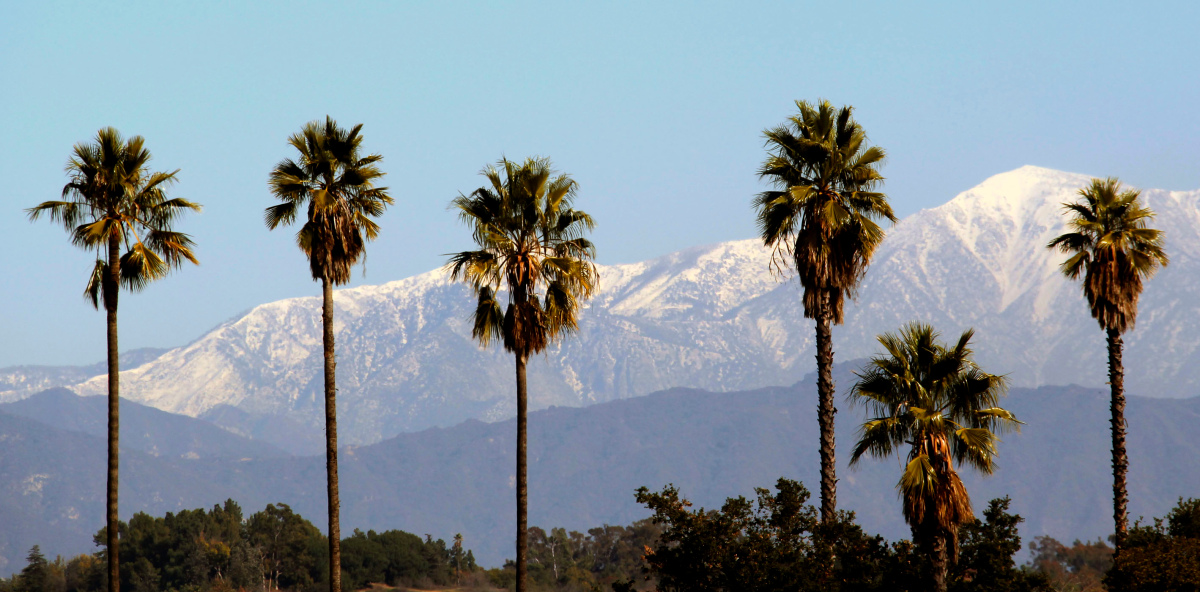 Alfa img   Showing California Palm Trees Background 1200x592