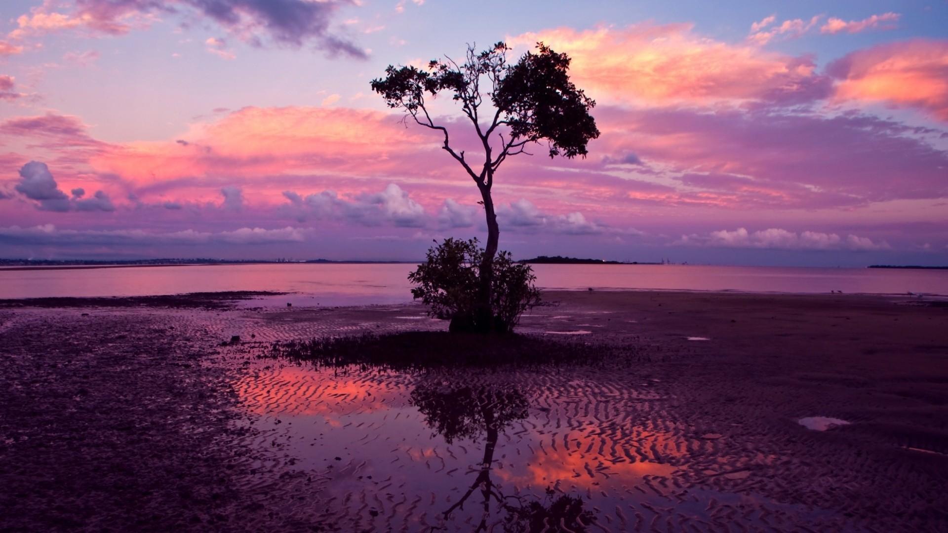 Pink sunset Wallpaper 35588 1920x1080