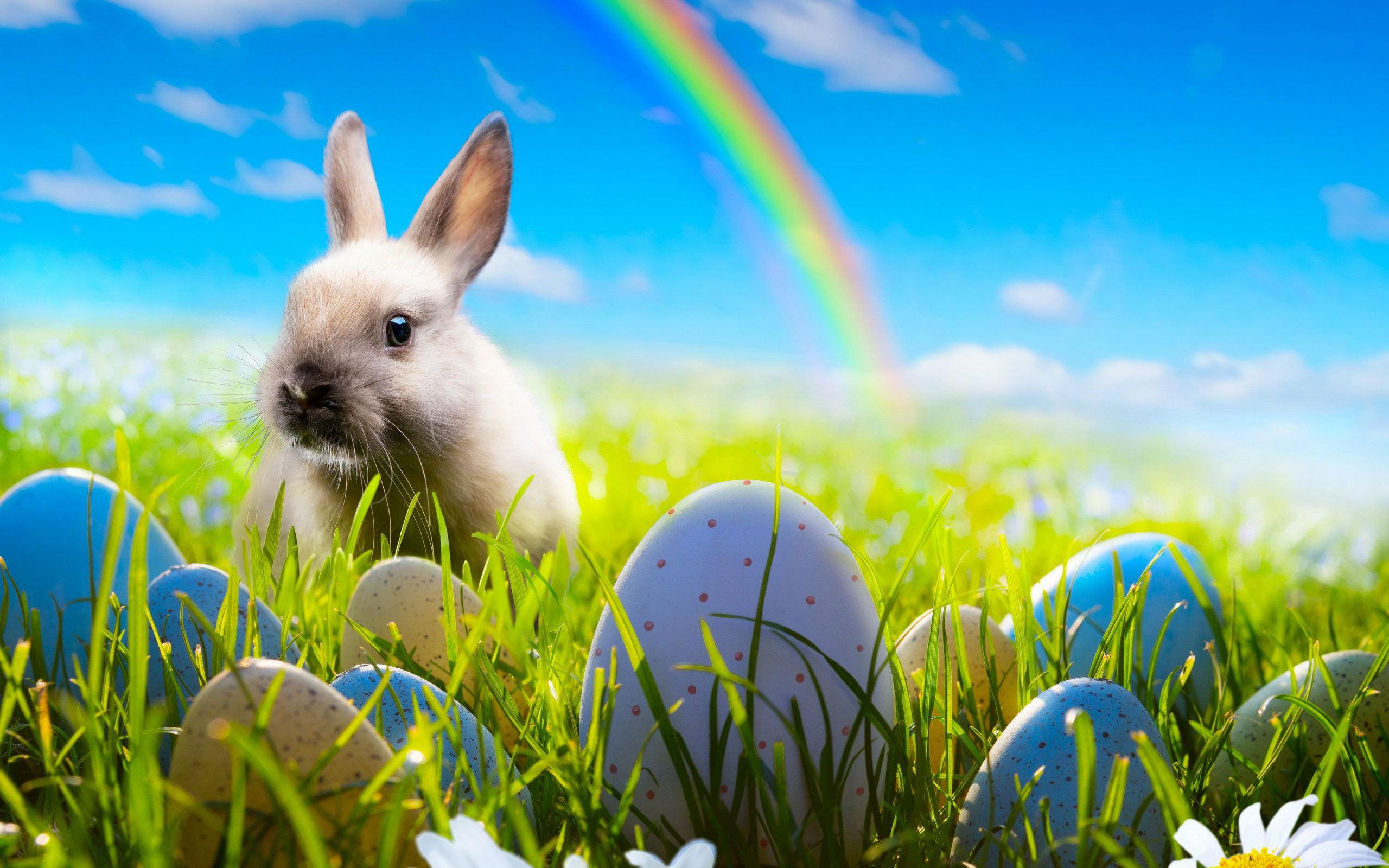 Easter Rabbit Wallpaper HD 19315   Baltana 2560x1600