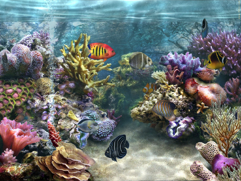 aquarium fish wallpaper free downloadjpg 1024x768