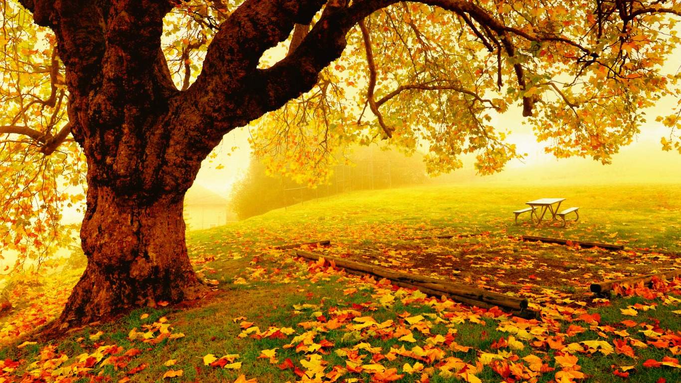 Pretty Autumn Day Computer Wallpapers Desktop Backgrounds 1366x768 1366x768