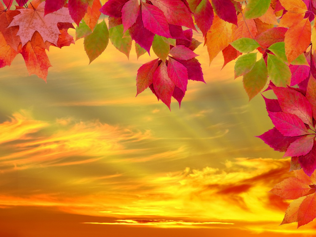 Fall Wallpaper   cynthia selahblue cynti19 Wallpaper 35525309 1024x768