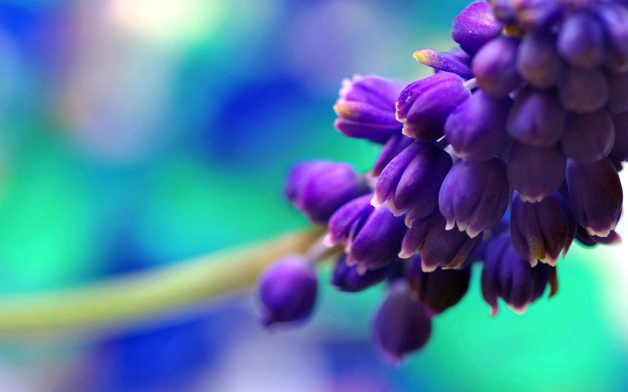 Spring buds purple wallpapers HD Wallpaper Downloads 1280x800