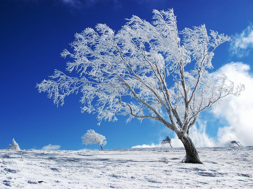 Winter Scenery PowerPoint Background  12 1024x768