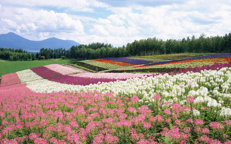 Japan Hokkaido Landscape 1 wallpaper 1440x900