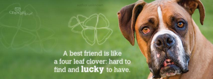 Best Friend 850x315