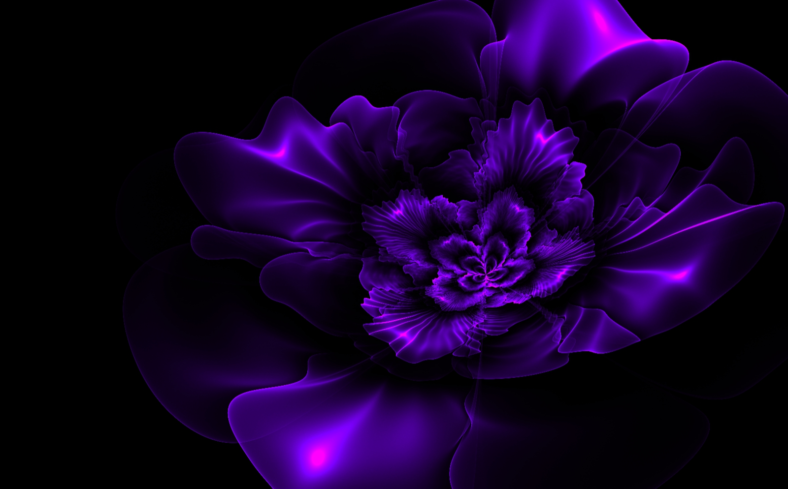 purple flower black background | amazing wallpapers