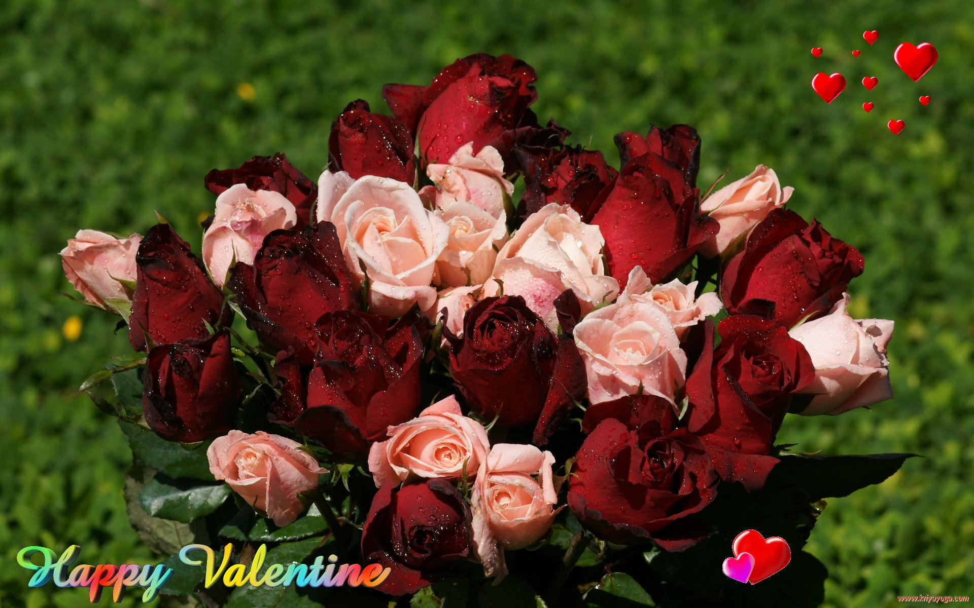 valentine roses wallpaper  wallpapersafari, Beautiful flower