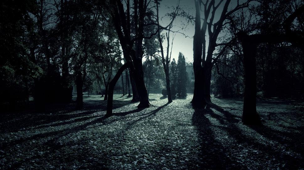 Dark Forest Shadows wallpaper   ForWallpapercom 969x544