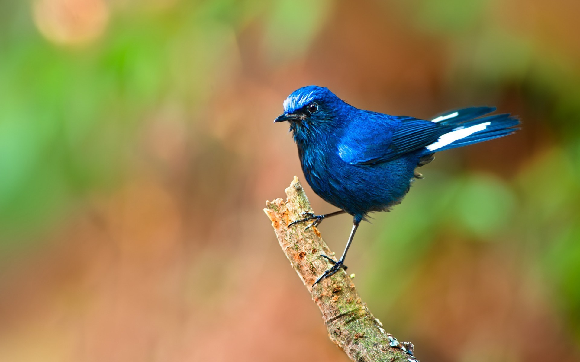 Blue Bird HD Wallpapers Live HD Wallpaper HQ Pictures 1920x1200