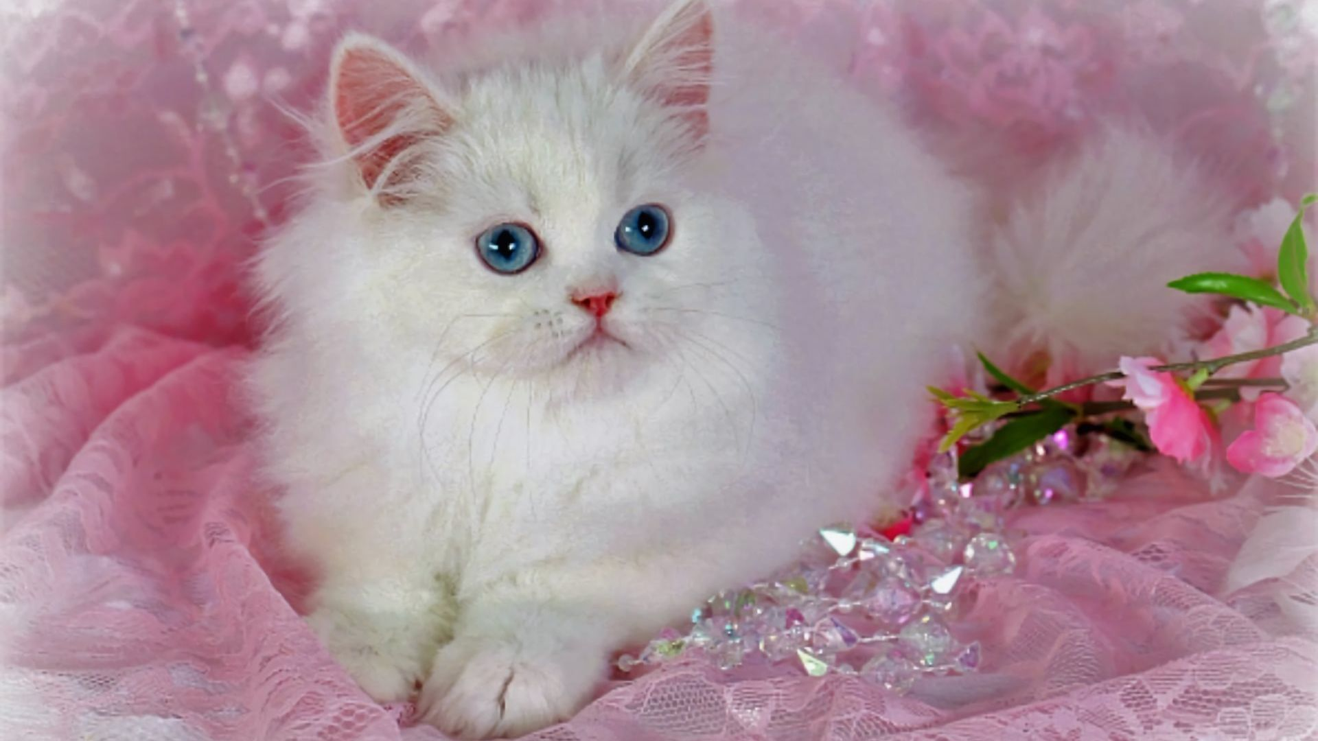Beautiful Cats Wallpapers   Top Beautiful Cats Backgrounds 1920x1080