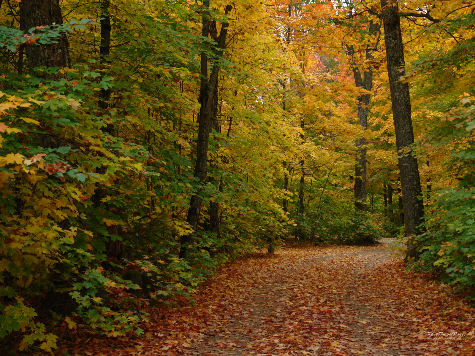 autumn road green starting to fall leafs desktop wallpaper 1600x1200