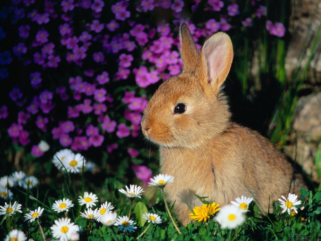 Beautiful Rabbit Wallpapers 1024x768