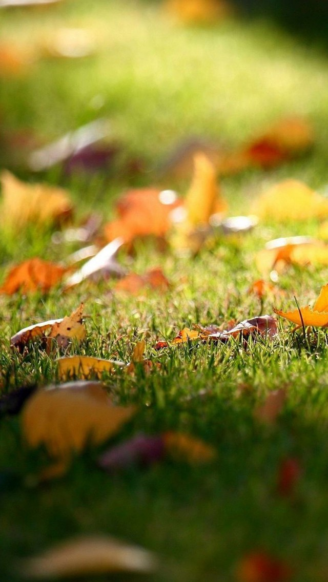 autumn wallpaper iphone   wwwhigh definition wallpapercom 640x1136