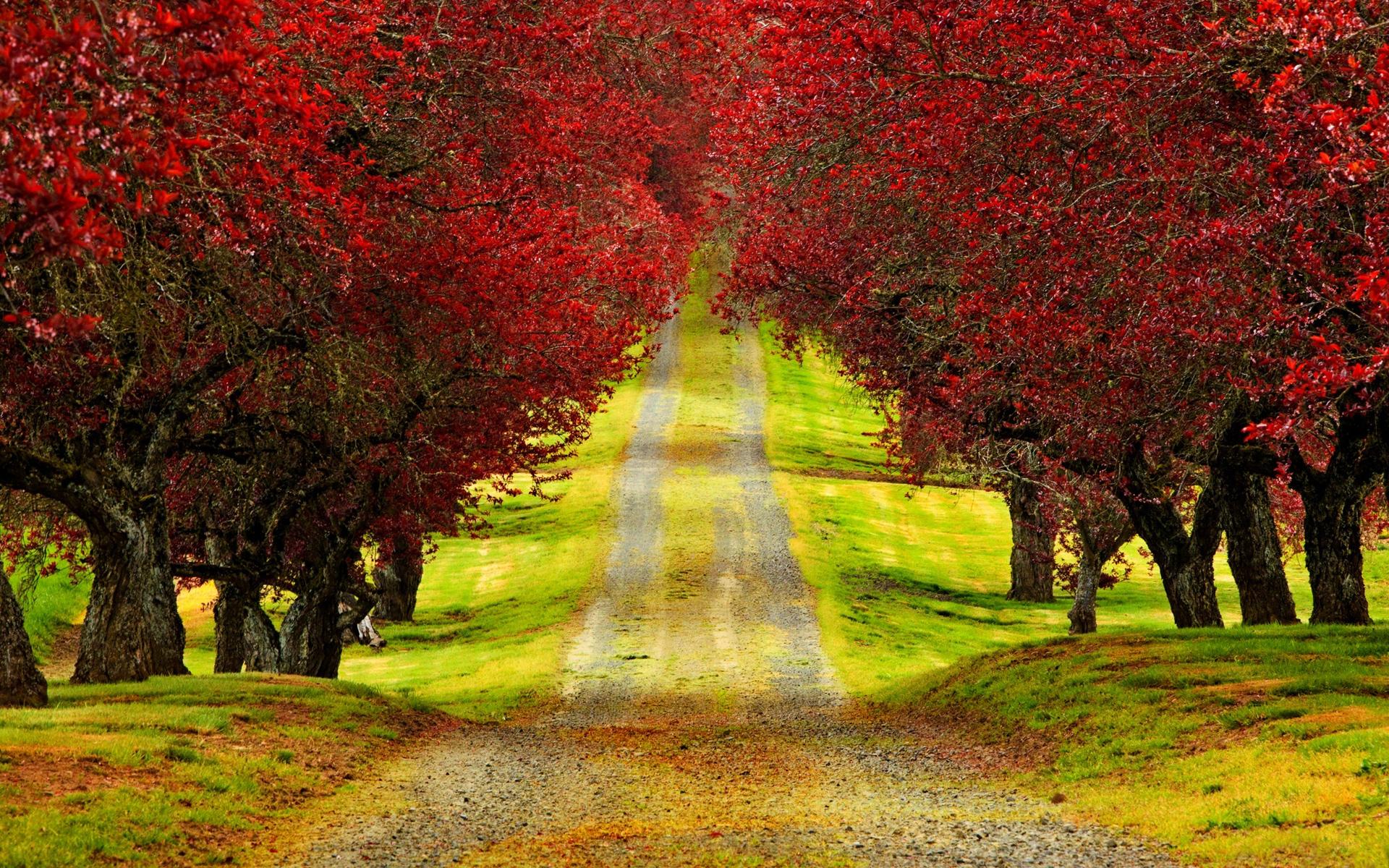 Free Download Trees Autumn Road Beautiful Hd Wallpaper 3d Hd