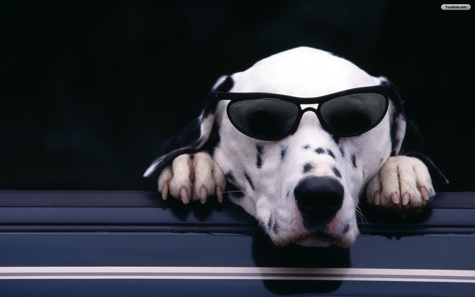 Cool Dogs HD Wallpapers HD Wallpapers 360 1600x1000