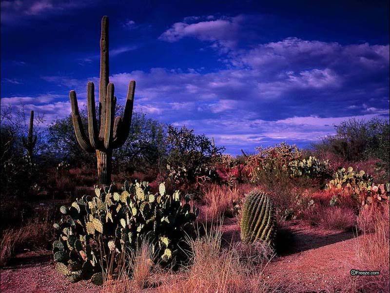 Arizona Desert Wallpaper Arizona Desert Background for Desktops 800x600