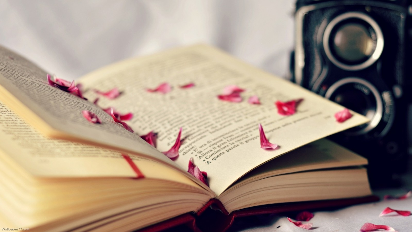 Book Lover Wallpaper Wallpapersafari