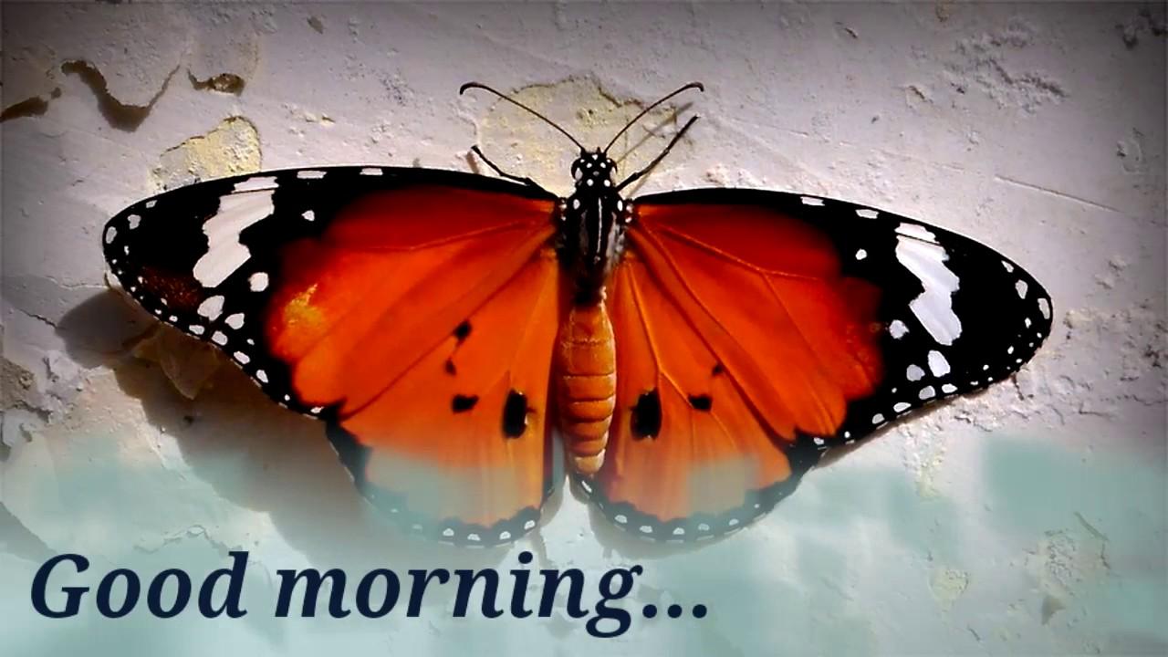 good morning live wallpaper made by deepak 1280x720