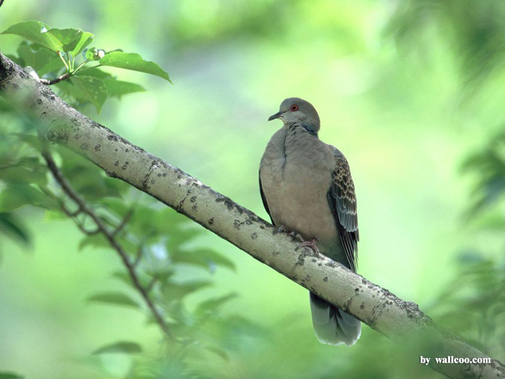 Birds Wallpaper   Lovely Bird in Spring Vol1 1024x768 NO16 Desktop 1024x768