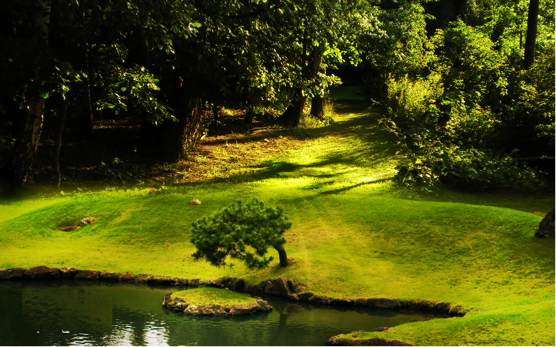 download Natural Wallpaper background Green Nature Wallpaper 1440x900