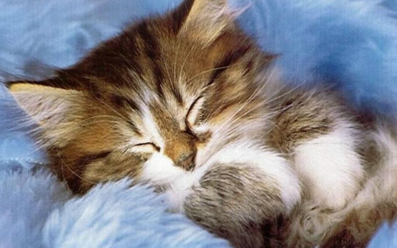 Cute Kitten   Kittens Wallpaper 16122136 1280x800