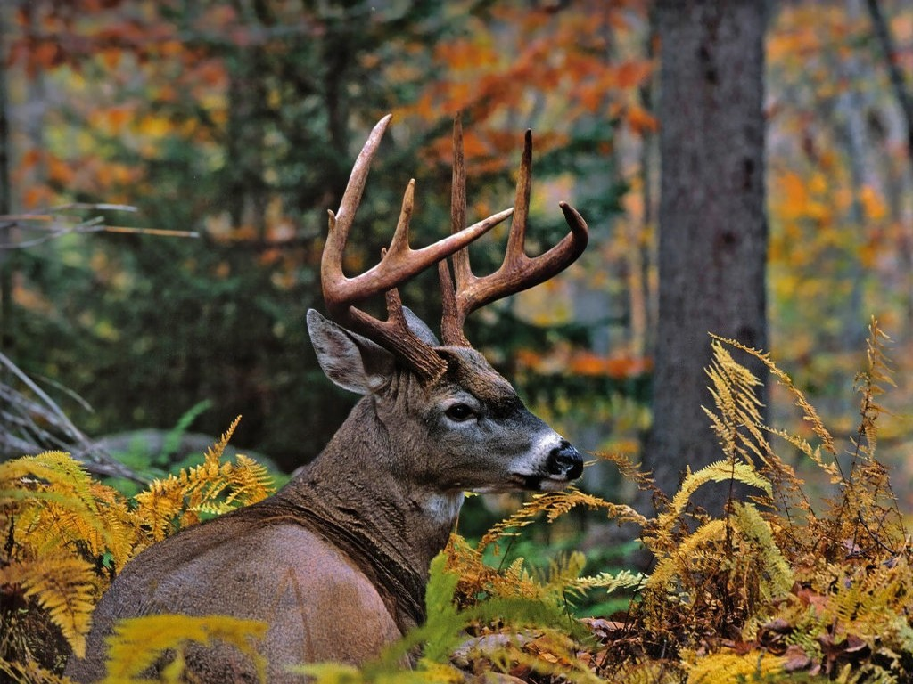 3d deer screensavers Car Pictures 1024x768