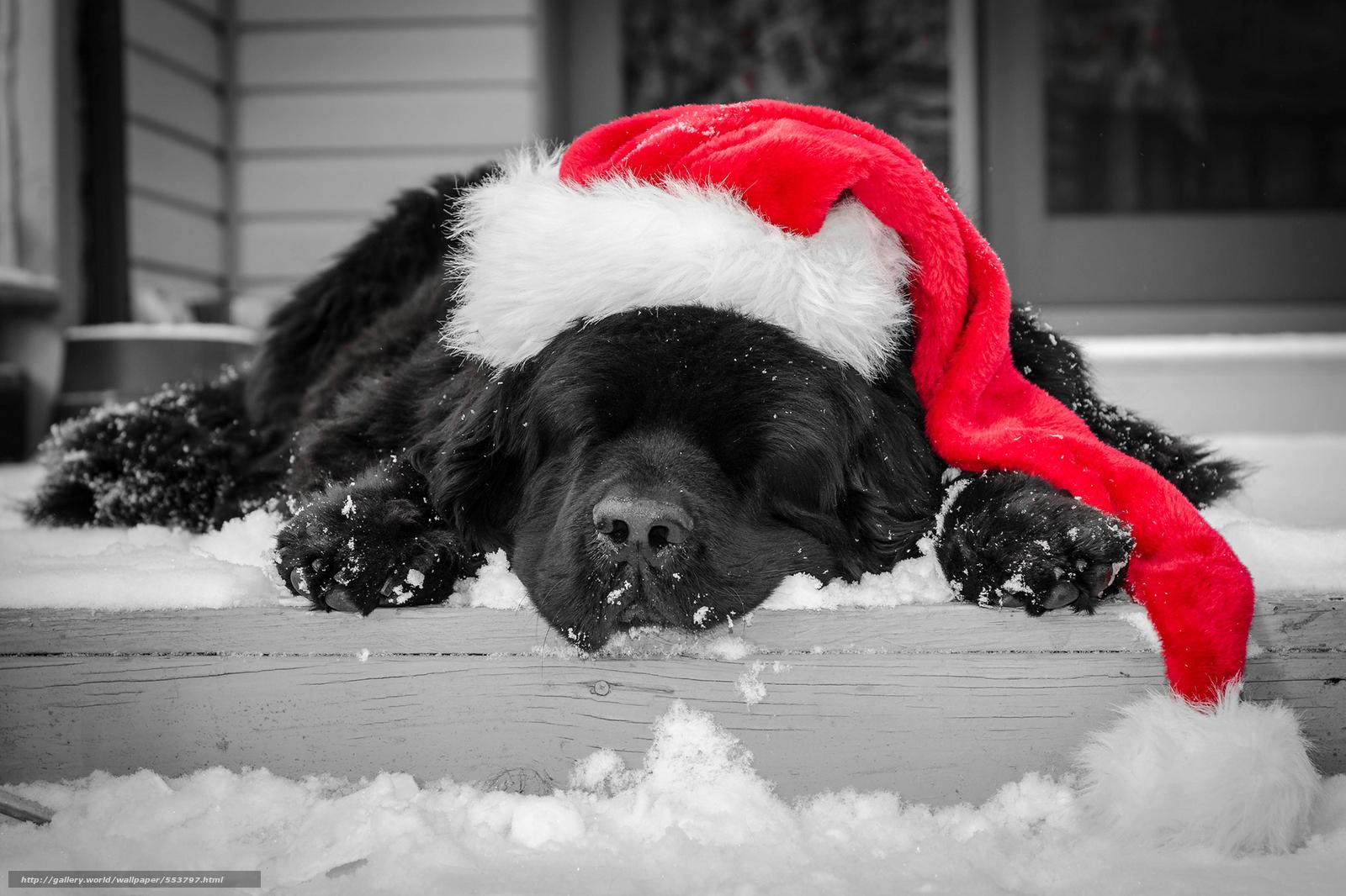 Download wallpaper sleepy, dog, dogs, animal free desktop wallpaper in ...
