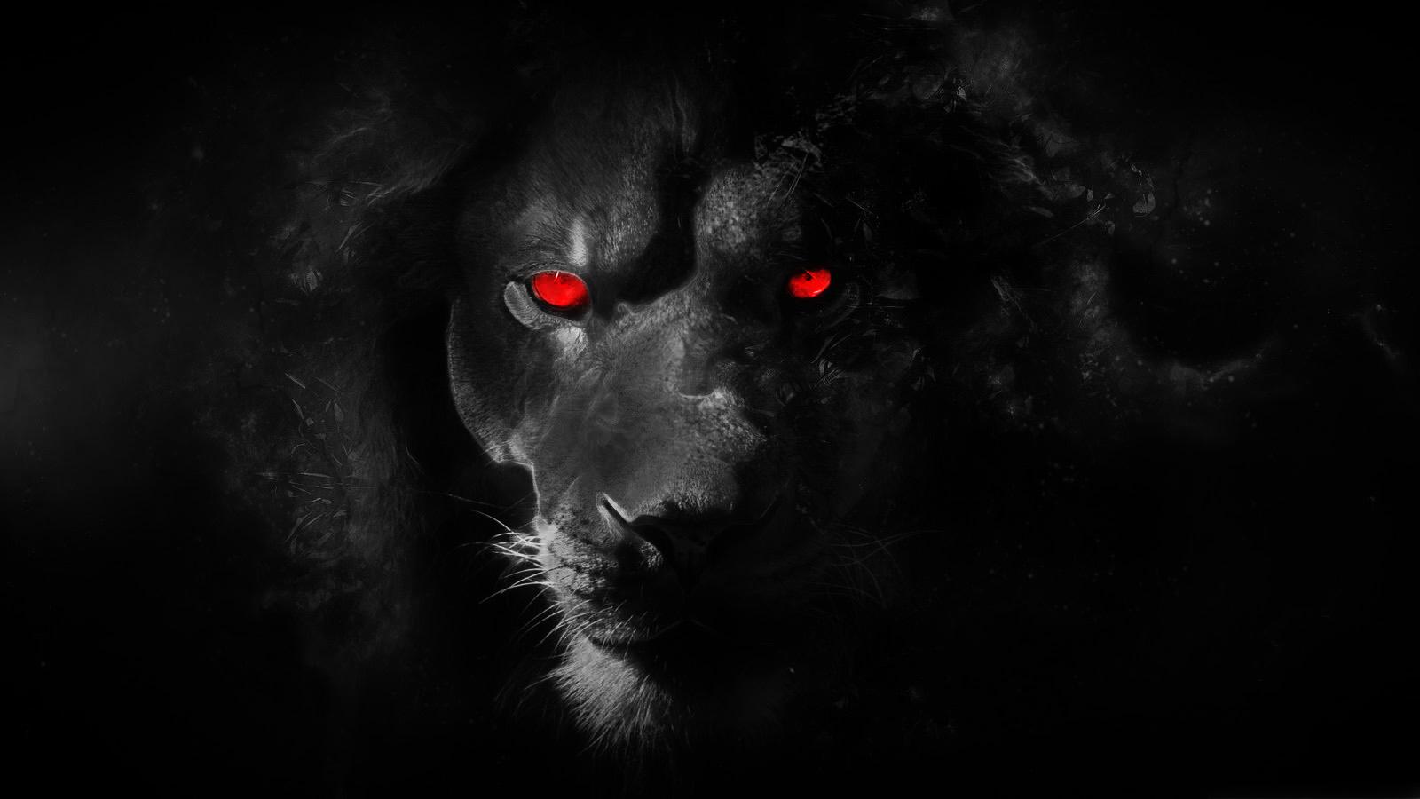 black lion wallpaper - wallpapersafari
