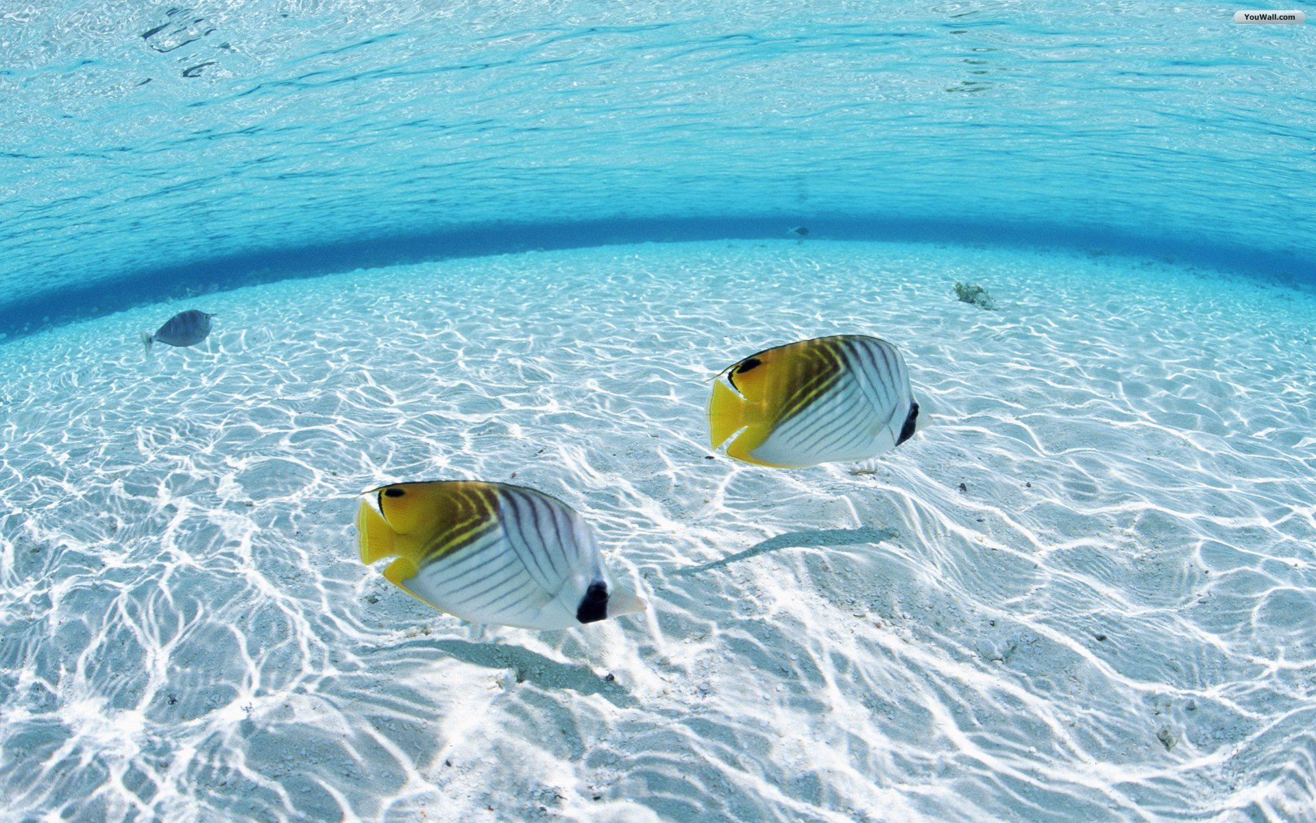 fish in water wallpaper wallpapersafari