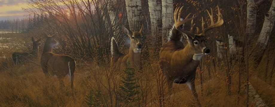 Hunting Whitetail Wallpaper Hd Hunting big whitetails 920x360