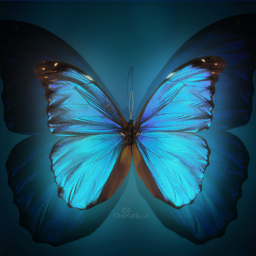butterfly wallpaper download christian mobile wallpaper wallpaper 1024x1024