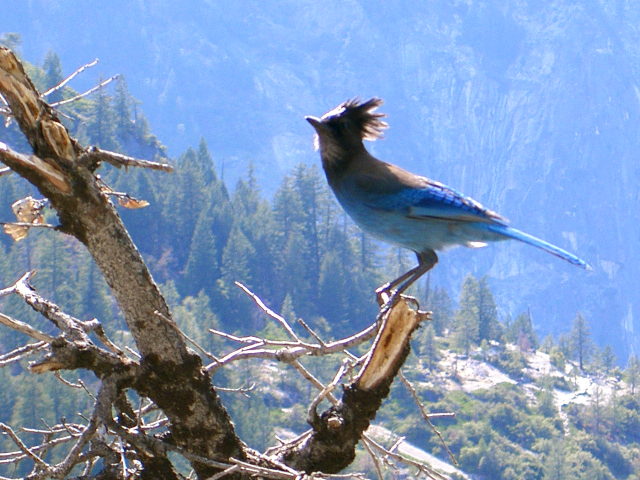Funny Image Collection Beautiful Blue Bird Wallpaper 1280x960