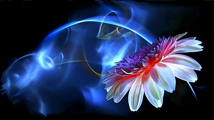 flower neon Beautiful Flowers Butterflies Pinterest 736x414