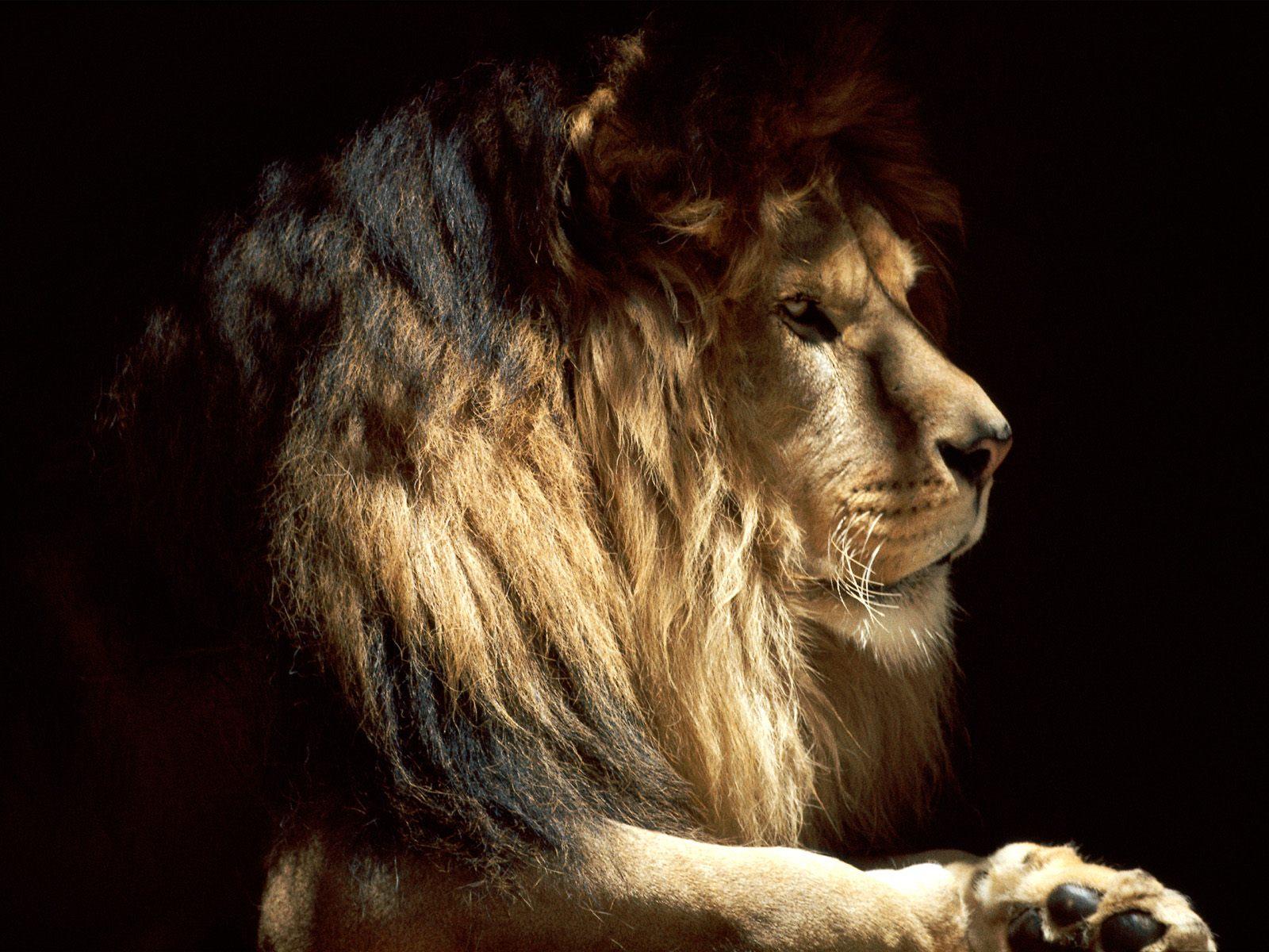 leon en la oscuridad leon tapandose el rostro papa leon con su hijo 1600x1200