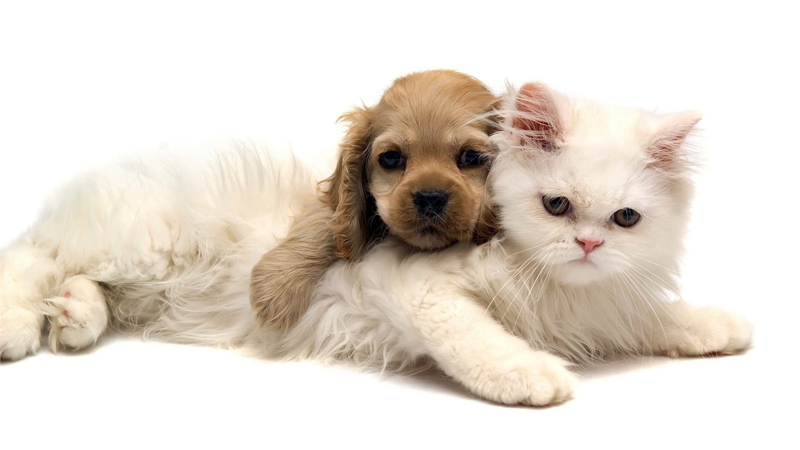 Cats and Dogs Wallpapers Fun Animals Wiki Videos Pictures Stories 1600x900