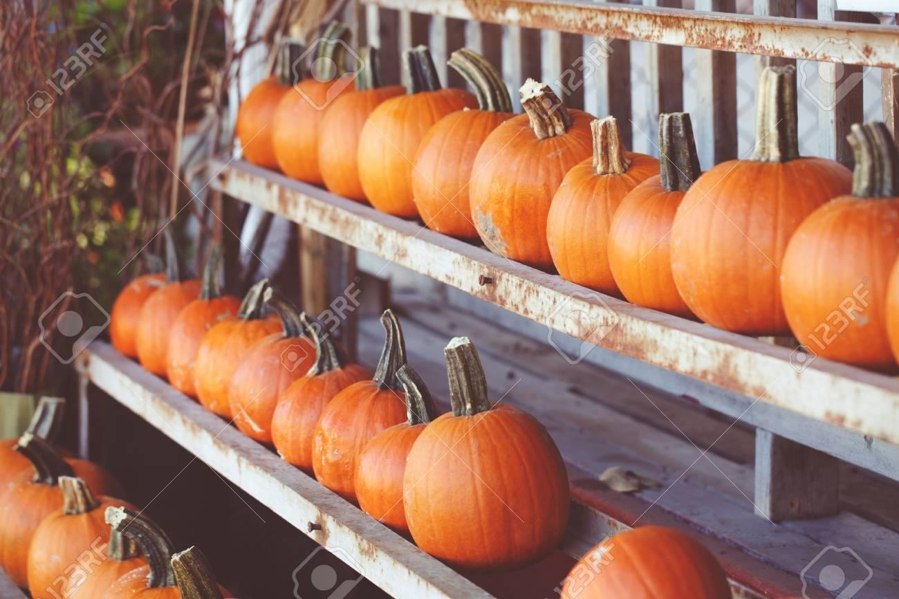 Fresh Harvest Farm Pumpkins On Shelf In Market Place Halloween 1300x866