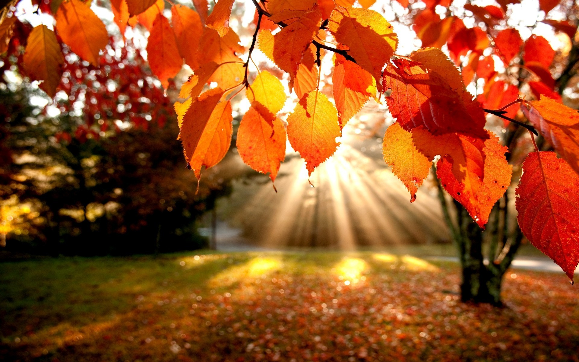 Fall Leaves Wallpapers for Desktop wallpaper Fall Leaves Wallpapers 1920x1200