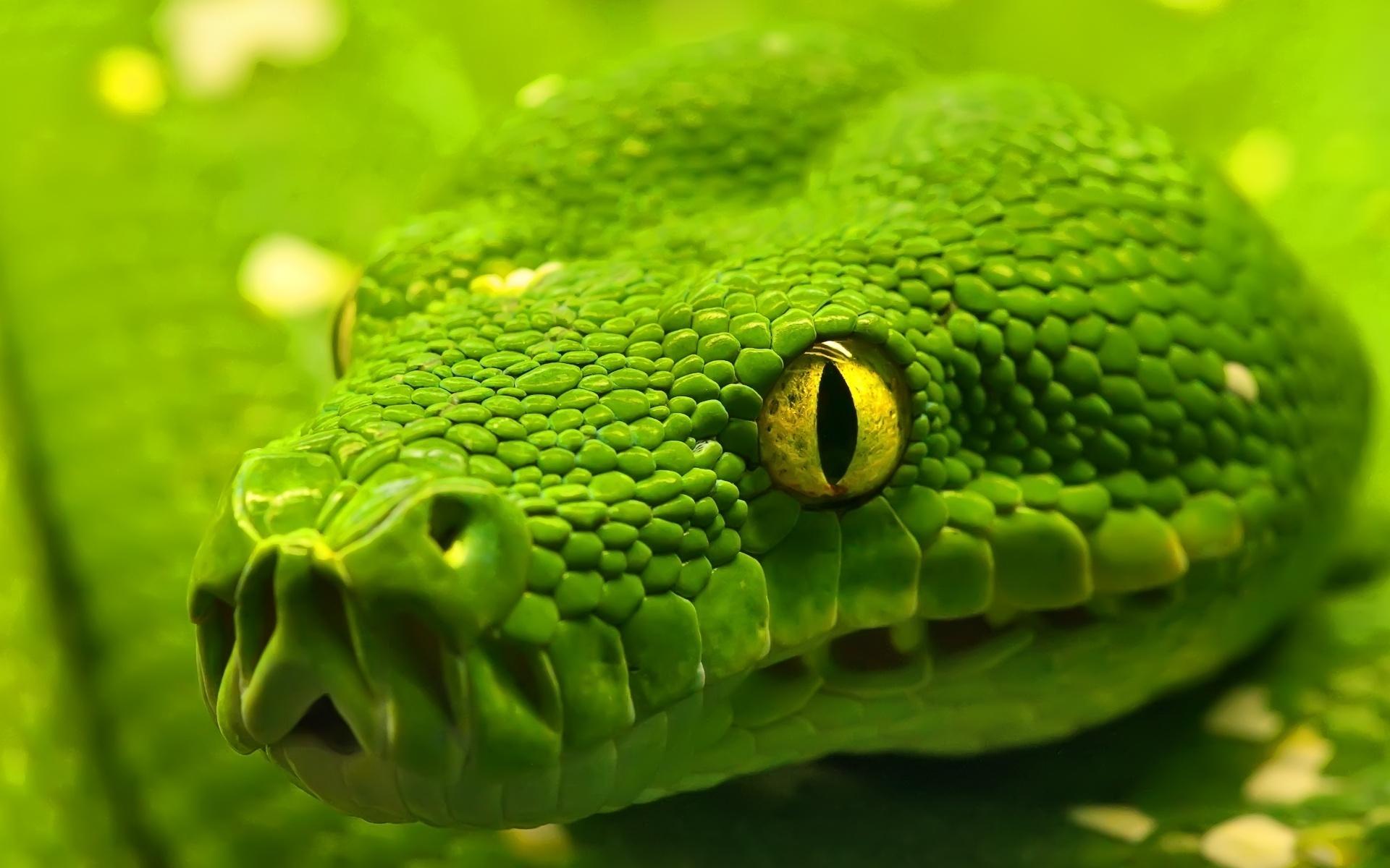 snake wallpaper green anaconda reptile eyes desktop wallpapers a l 1920x1200