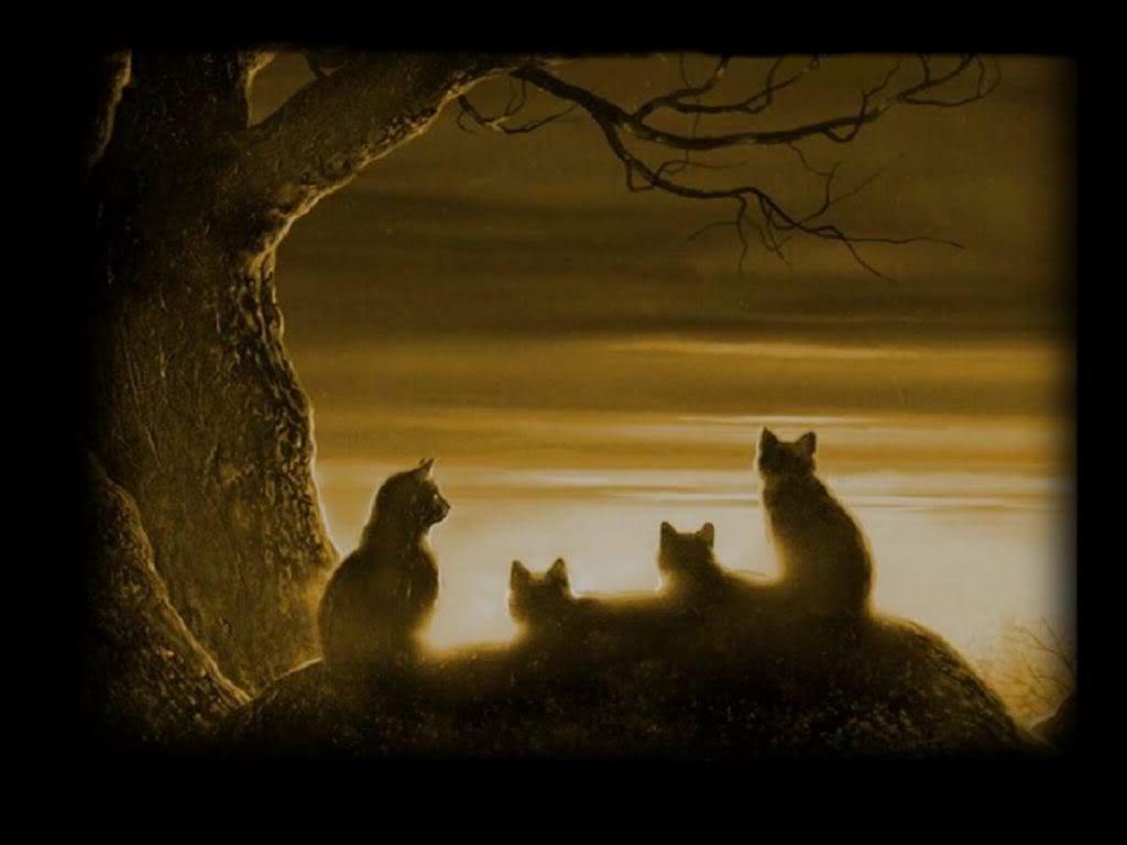 1024x768px warrior cats wallpaper desktop - wallpapersafari