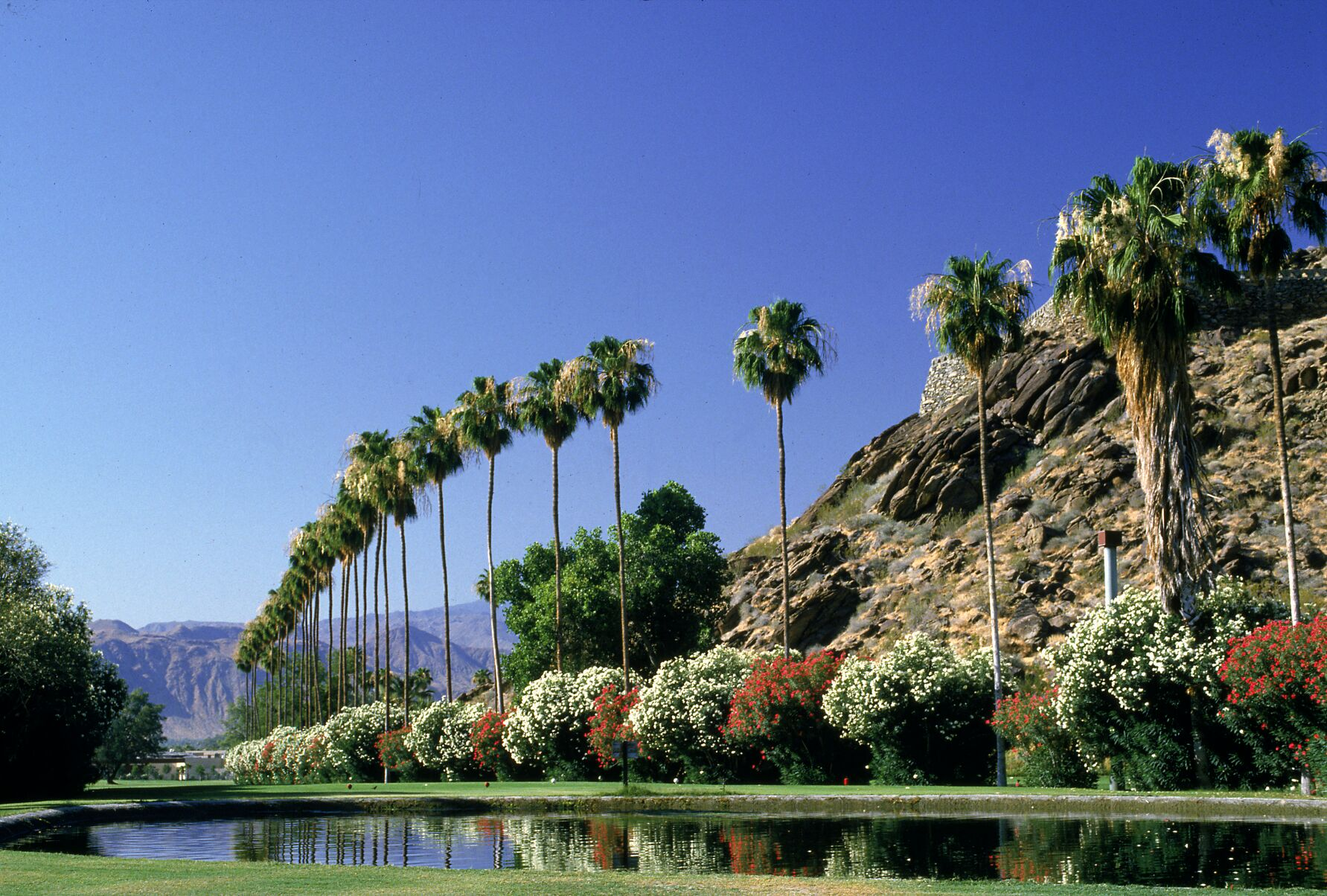 Spring in the desert wallpaper wallpapersafari - Palm canyon resort 2 bedroom villa ...