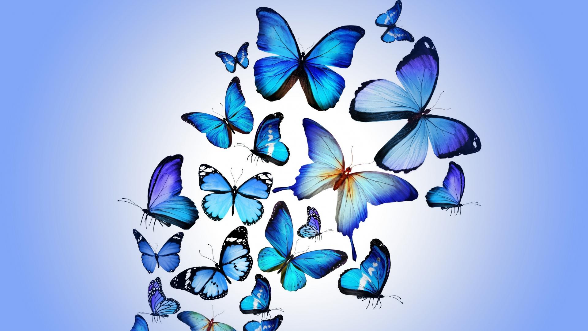 Blue butterfly wallpaper HD Desktop Wallpaper 1920x1080
