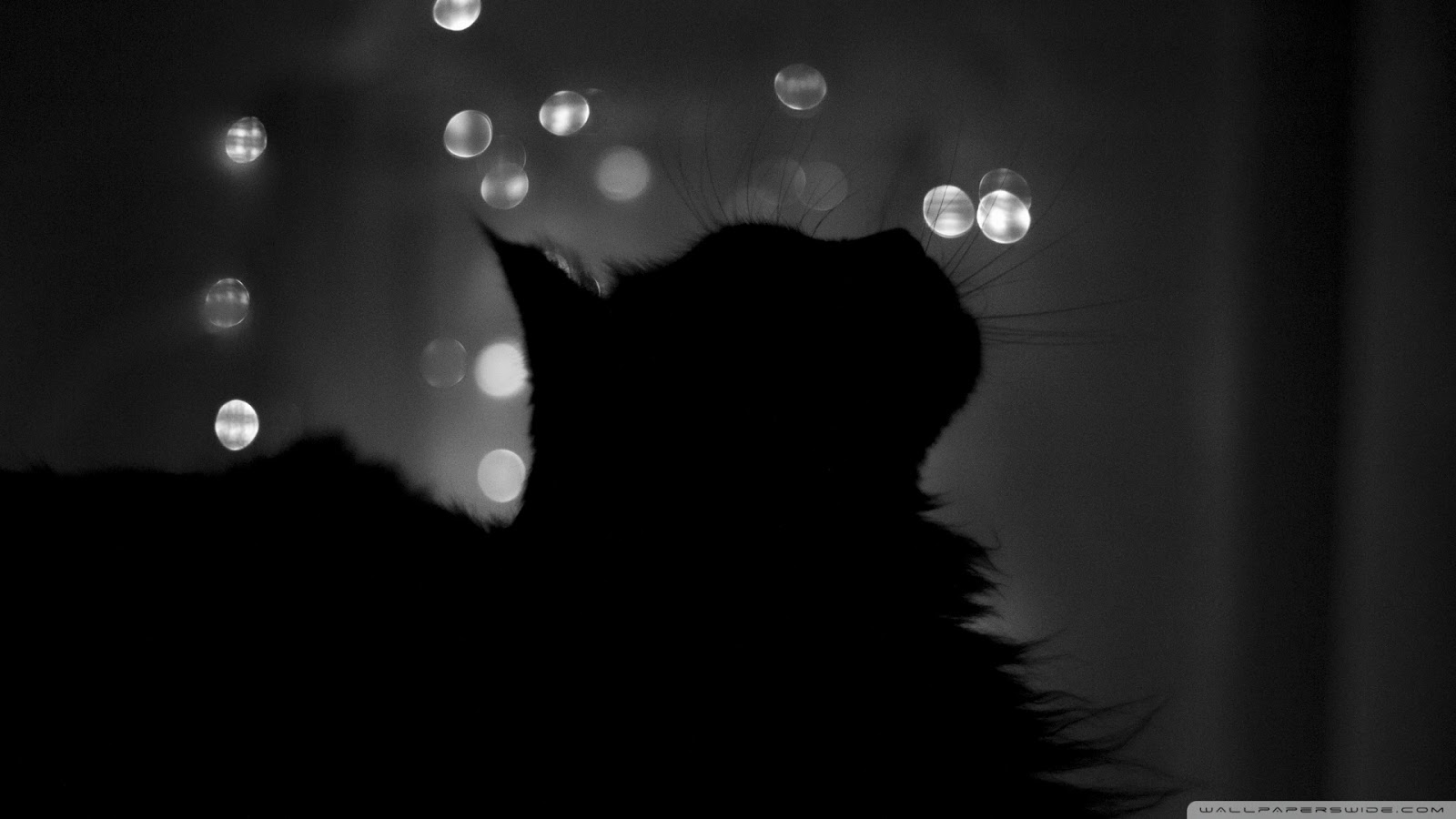 Black Cats HD Wallpapers Black Cats HD Wallpapers Check out the cool 1600x900