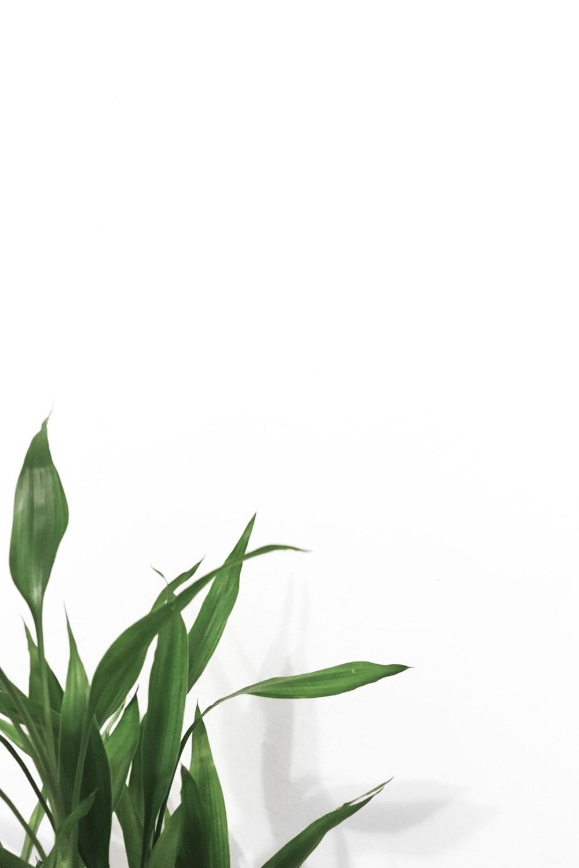 52+ Houseplant Wallpaper on WallpaperSafari