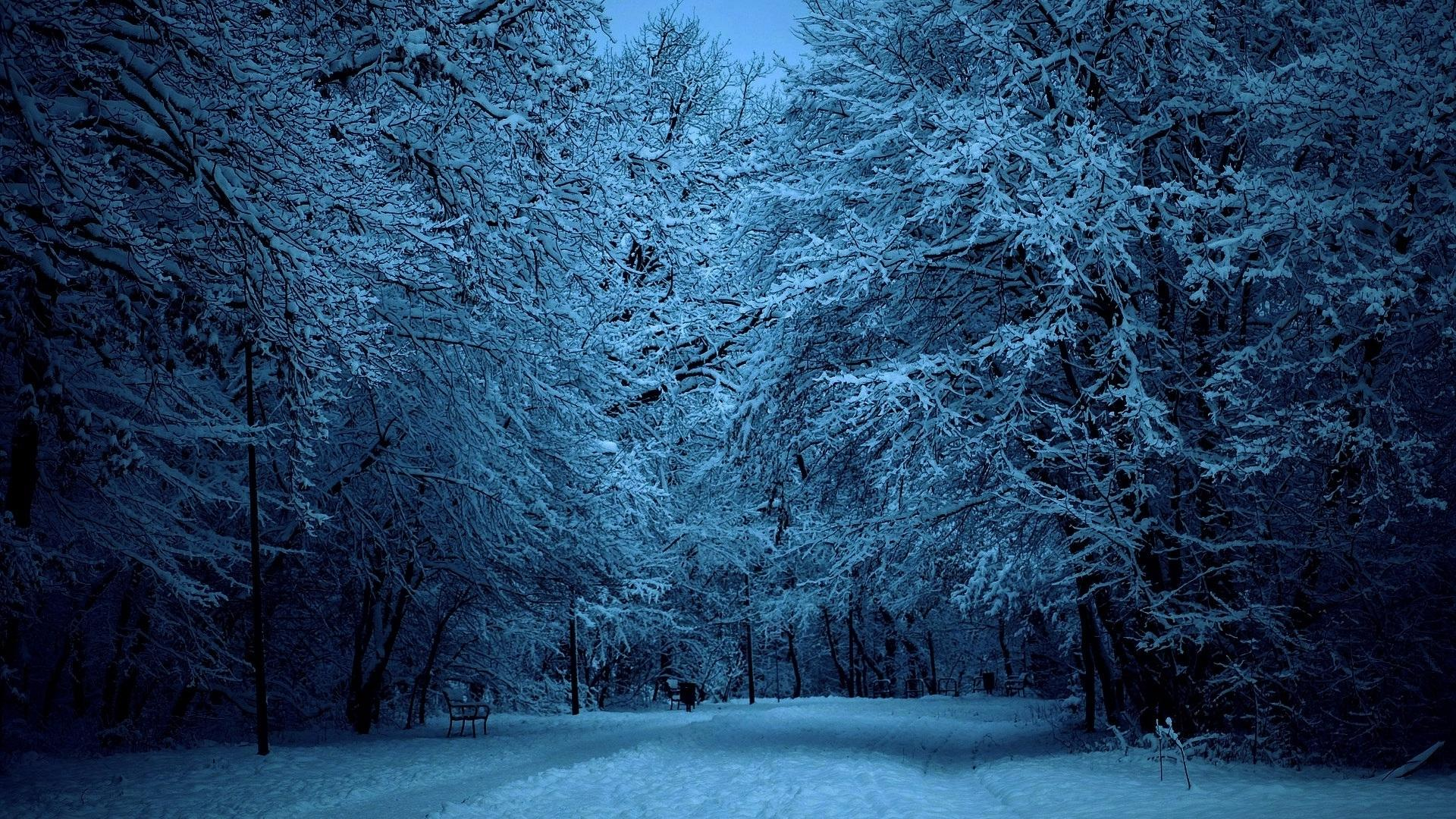 Nature Winter Tree Snow Snowy trees HD Wallpapers Desktop 1920x1080