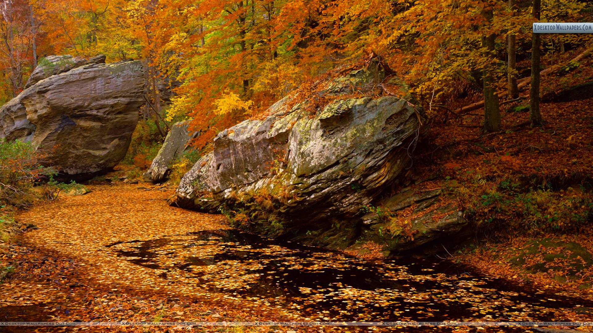 Smith Springs Recreation Area Shawnee National Forest Wallpaper 1920x1080